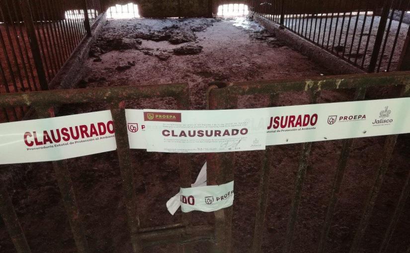 Clausuran granjas de cerdos en Tototlán yZapotlanejo