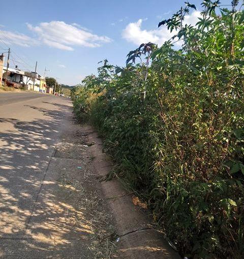 Tumban árboles y dejan el zacatal, no se pueden usar lasbanquetas